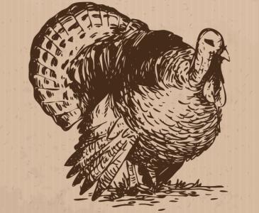 A Wild Thanksgiving