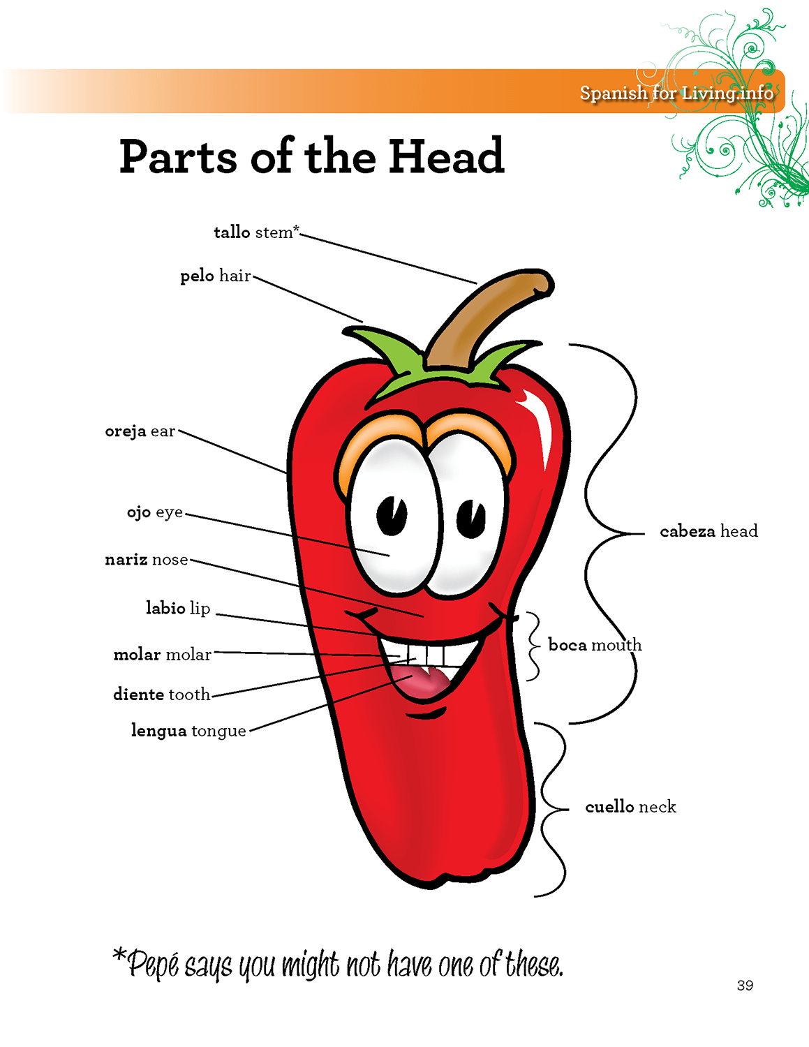 Parts of the Head from Textbook